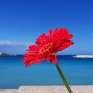 Puglia Italy guided tours Otranto seascape details nature flower