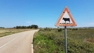 Puglia Italy tour landscape otranto countryside